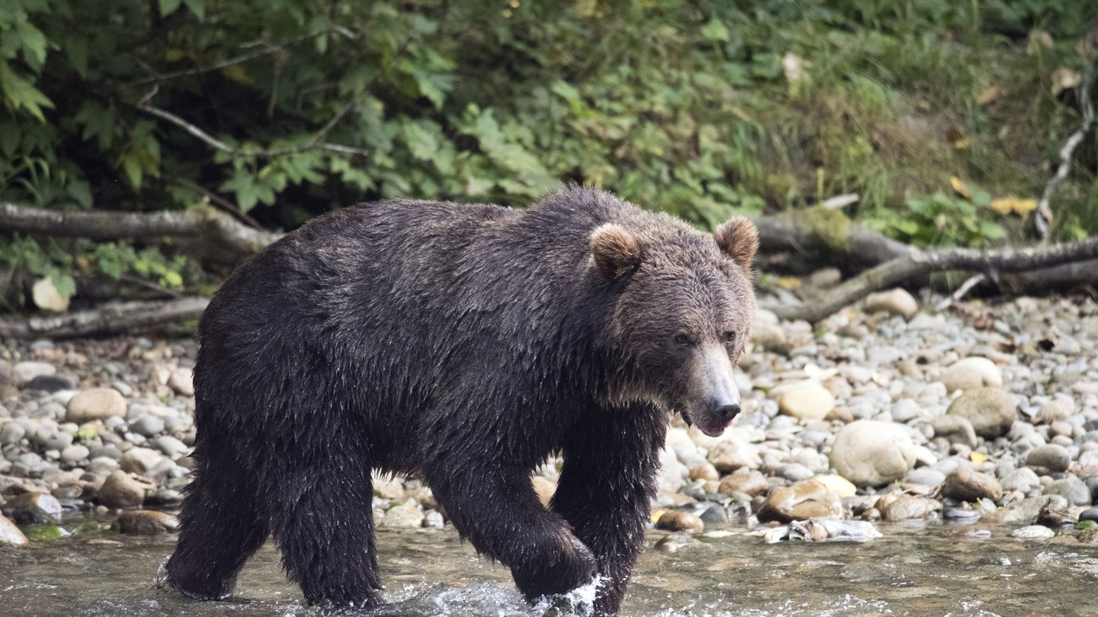 Mother and baby killed in grizzly bear attack