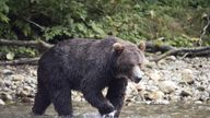 The pair are believed to have been killed by a grizzly bear. File pic