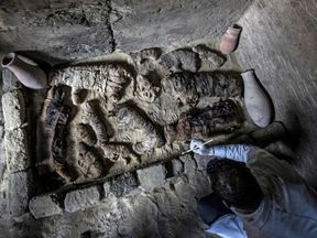 An archaeologist cleans mummified cats during the demonstration of a new discovery in Saqqara