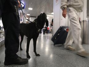 Sniffer dogs are being forced into early retirement