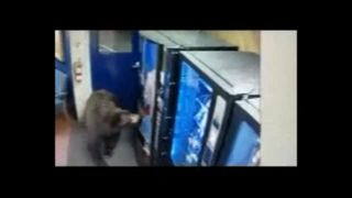 Footage shows a bear opening the door and casually strolls through a highway patrol facility in Donner Pass.
