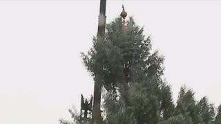 Christmas tree snaps as it is cut down in Youngstown, Ohio.