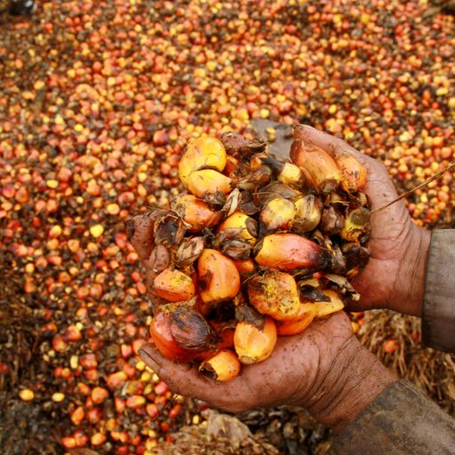 What is palm oil and why is it damaging?