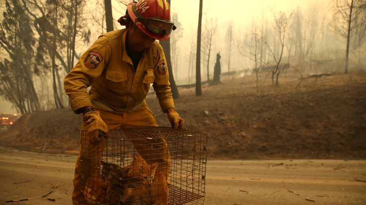 A firefighter carries a cage full of cats that were found in the road after the Camp Fire ripped through the town of Paradise