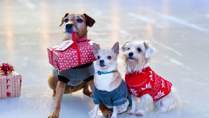 Ivor, Miguel and Gracie wear a Christmas jumpers on the ice rink at Westfield London ahead of Christmas Jumper Day on December 14th, in aid of Save the Children