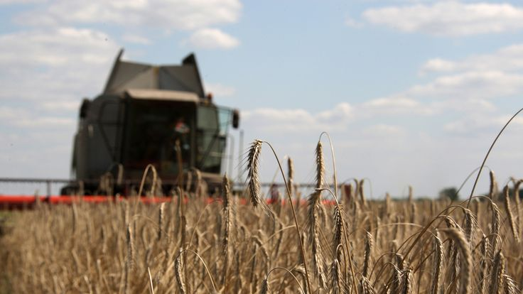 The wheat and barley fields of Ukraine used to be known as the granary of Europe
