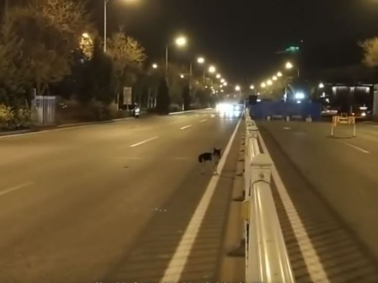 Mourning dog waits for 80 days in road where owner died
