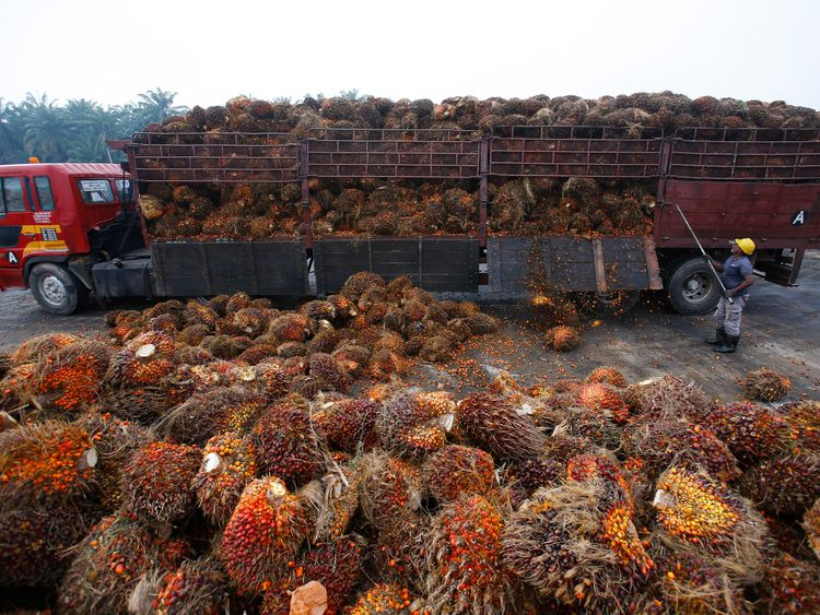 A worker unloads palm oil fruits from a lorry inside a palm oil factory in Salak Tinggi, outside Kuala Lumpur August 4, 2014. REUTERS/Samsul Said/File Photo
