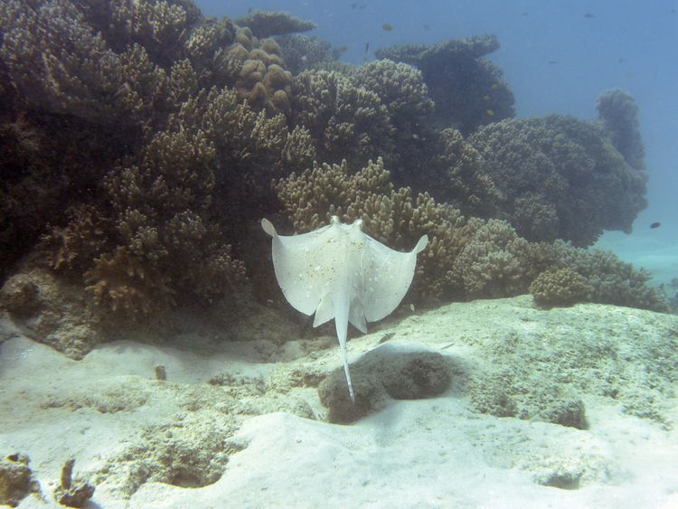 swimmer dies after being stung by stingray off australia beach