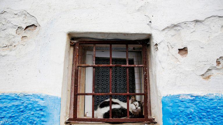 A cat in Rabat, Morocco. File pic