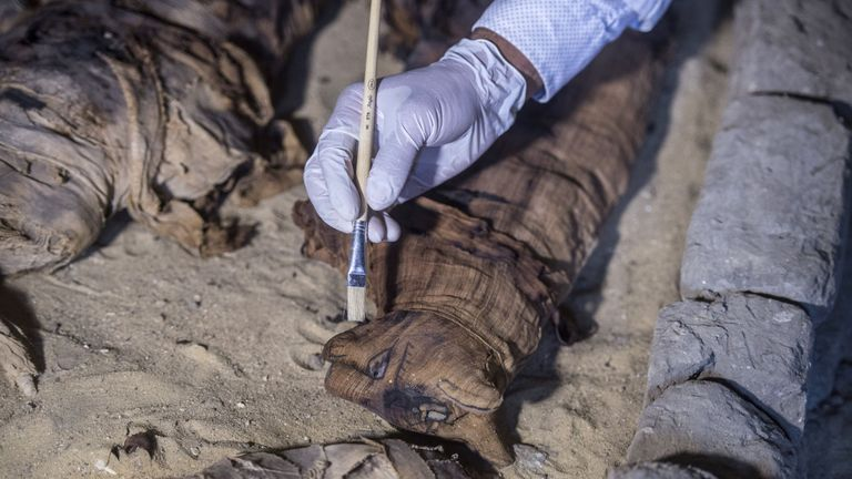 Dozens of cat mummies were discovered in Pharaonic Age tombs near Cairo