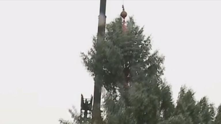 Cut Down Christmas Tree Near Me.Youngstown Ohio Will Have To Find Another Christmas Tree After The One It Intended To Use Snapped While Being Moved