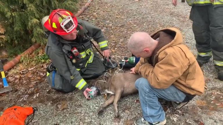 Dog revived by resuscitation. Pic: Wayne Township Fire Department
