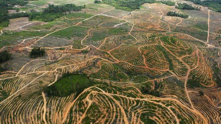 n aerial view is seen of forest being cleared by palm oil companies in the Ketapang district of Indonesia's West Kalimantan province, July 5, 2010. The photograph was taken as part of a media trip organised by conservationist group Greenpeace, which has campaigned against palm oil expansion in forested areas in Indonesia. REUTERS/Crack Palinggi (INDONESIA - Tags: ENVIRONMENT DISASTER BUSINESS IMAGES OF THE DAY)
