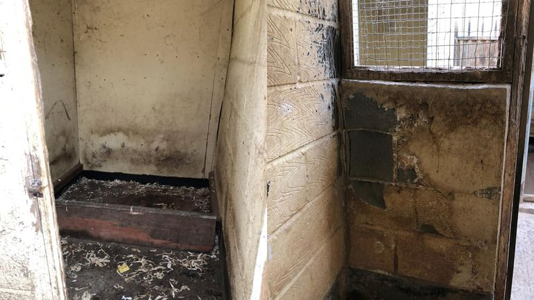 Stains and worn away walls in the kennels. Pic: Celia Cross Greyhound Trust