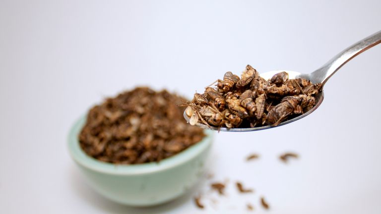 Edible crickets are a major food source in some countries around the world