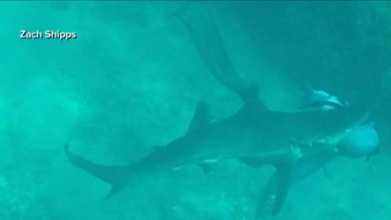 Diver Will Krause encountered the shark as he was fishing underwater in the Bahamas