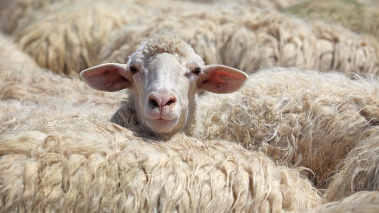 PETA asks a 1,000-year-old village to change its name from Wool to 'Vegan Wool'