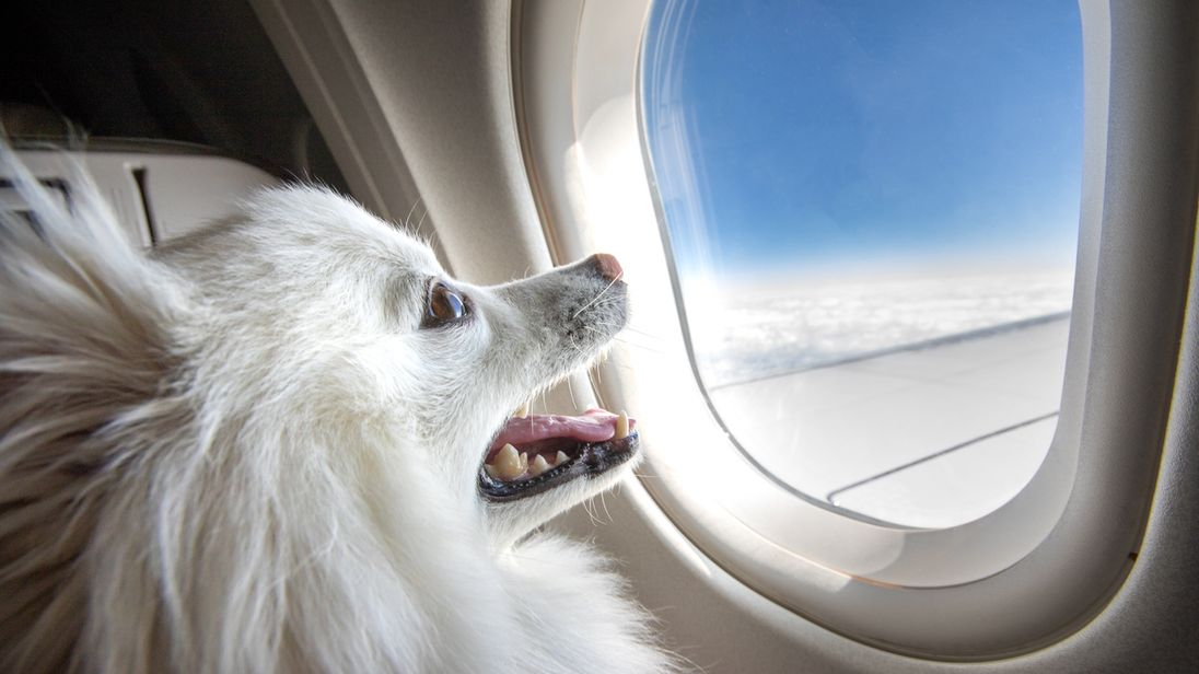 Delta will enforce new rules around emotional support animals on flights