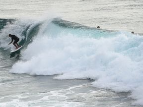 Australia has one of the highest rates of shark attacks in the world. File pic