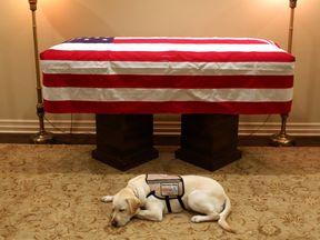 George HW Bush's service dog, Sully, lies in front of his master's flag-draped casket. Pic: jgm41