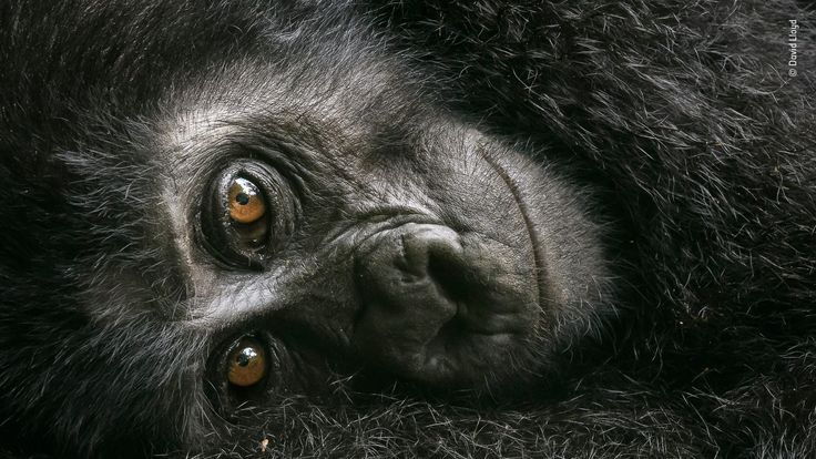 Wildlife Photographer Of The Year People's Choice - pic by David Lloyd