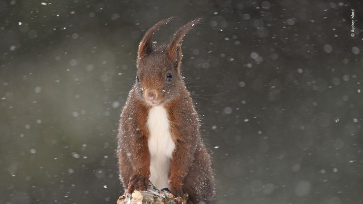 Wildlife Photographer Of The Year People's Choice - pic by Audren Morel