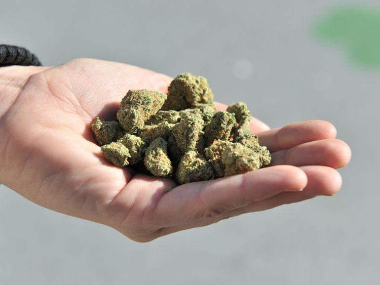 A woman holds a handful of marijuana flower buds. File pic