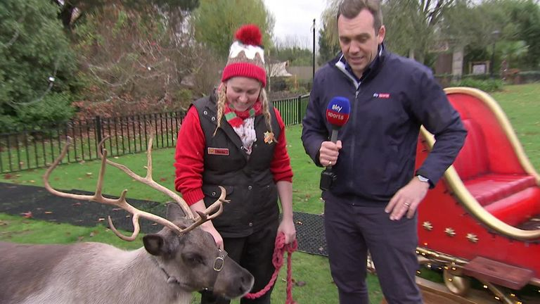 Derby Day results predicted by Drizzle the psychic reindeer | Football News |