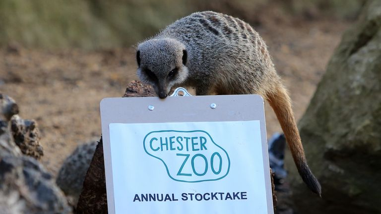 A fire has broken out at Chester Zoo. File pic