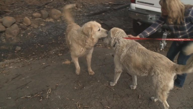 A dog that survived the California wildfire has been waiting at the burnt down remains of his home one month after the fire started.