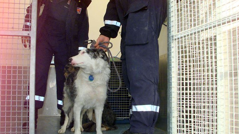 A dog in quarantine