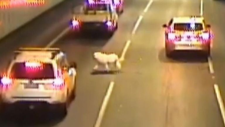 A dog was lucky to avoid death when it jumped from a car window in a road tunnel, before the owner was able to rescue it.