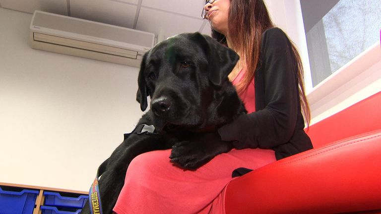 Meet Oliver, the UK's first justice support dog