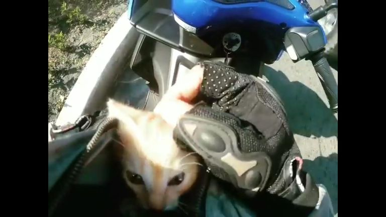 Lost kitten rescued from busy road