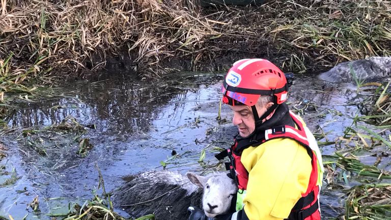 RSPCA officers entered the water to help the animals