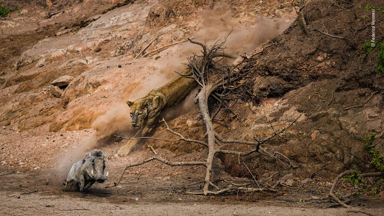 Wildlife Photographer Of The Year - pic by Federico Veronesi