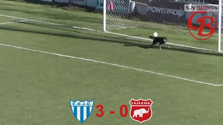 Dog performs unbelievable goal line save during soccer match