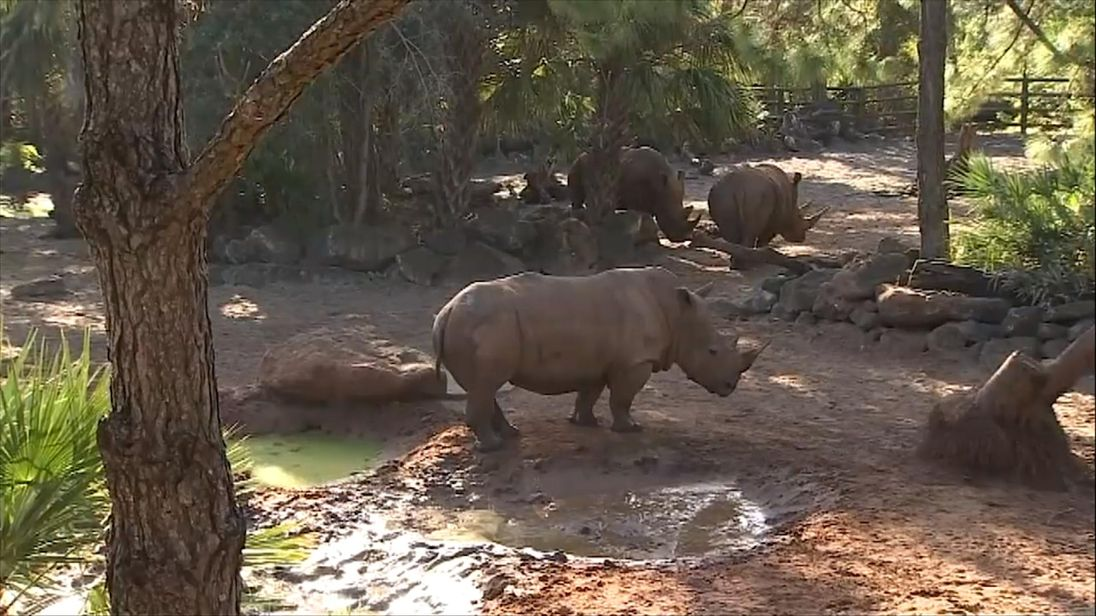 Rhino injures 2-year-old girl who fell into Brevard Zoo exhibit
