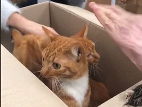 The cats are on the road to recovery. Pic: Celia Hammond Animal Trust