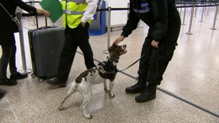 This is Spencer, one of the police dogs who helps patrol Birmingham airport.