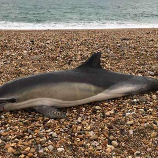 Plastics found in the guts of UK's sea creatures