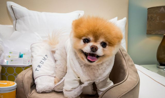 'World's cutest dog' Boo dies 'from broken heart'