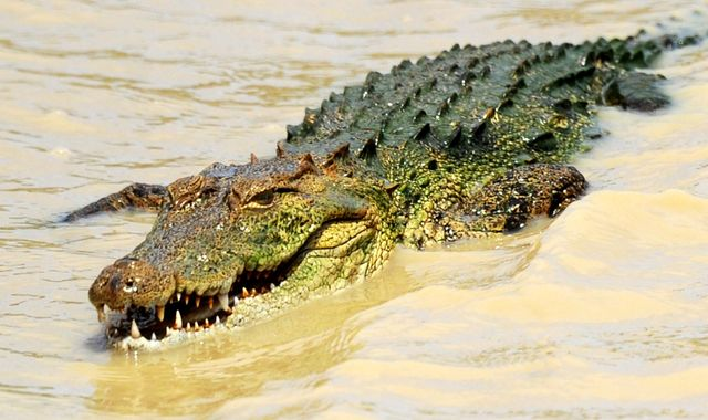 Scientist 'eaten alive by crocodile she was feeding in Indonesia'