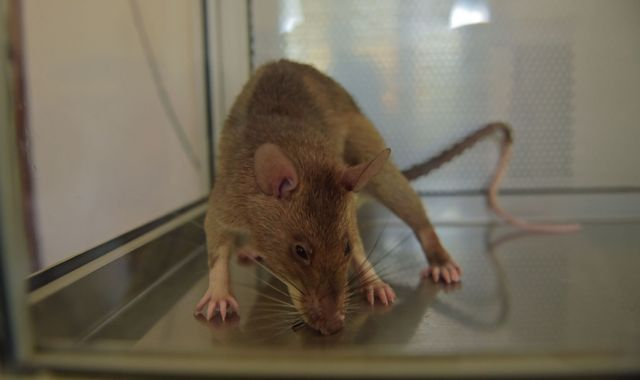 3D printing helps heal spinal cord injuries in rats