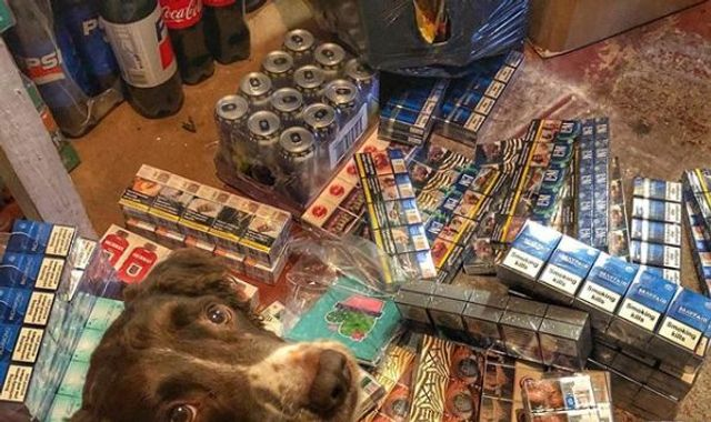 Gang hunt sniffer dog who has found illegal tobacco worth £6m