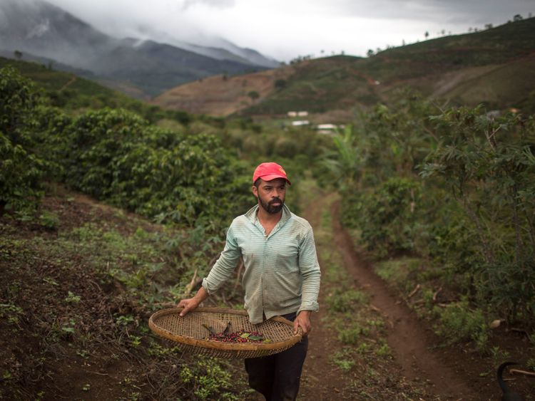 A worker picks coffee beans on his family farm in Brazil