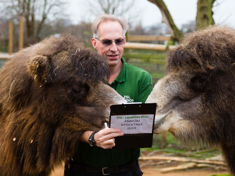 Mick Tiley counts the Bactrian camels and fights them off his clipboard