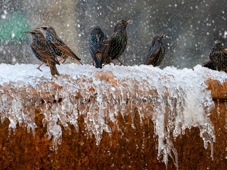 Birds play in the frozen fountain in Bryant Park January 11, 2019 in New York