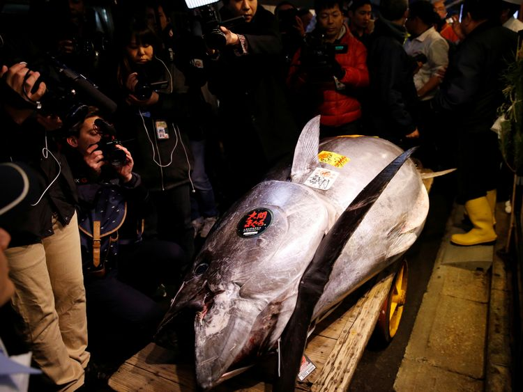 The jumbo tuna was the star attraction at the auction